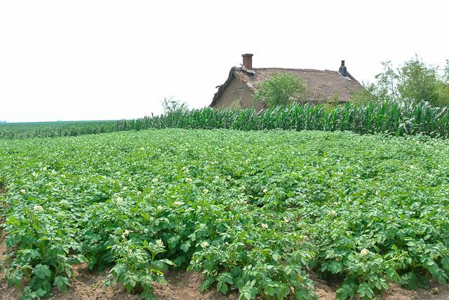 農村では「大地の子」から抜け出たような風景@黒竜江省木蘭