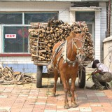 荷馬車に薪を満載@黒竜江省木蘭