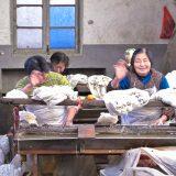 加工場で働くおばちゃんたち、再見!@桐郷