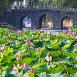 北海公園の蓮の花@北京